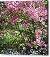 Overgrown Natural Beauty Acrylic Print