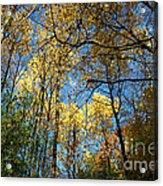 Overhead Glory Acrylic Print
