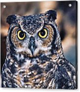 Owl 2 Acrylic Print