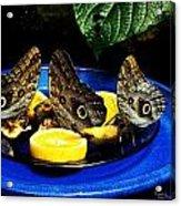 Owl Butterflies Acrylic Print