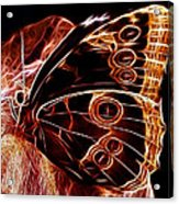 Owl Eye Butterfly Acrylic Print