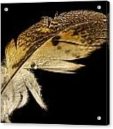 Owl Feather With Water Acrylic Print