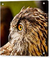 Owl Profile Acrylic Print