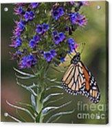 Pacific Grove Monarch Acrylic Print