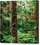 Pacific Rim National Park 14 Acrylic Print