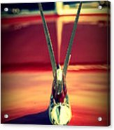 Packard Swan 3 Acrylic Print
