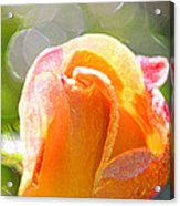 Paint Daub Yellow Rose Acrylic Print