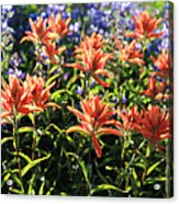 Paintbrushes Wildflowers Rainier National Park Acrylic Print