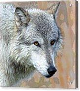 Painted Grey Wolf Acrylic Print