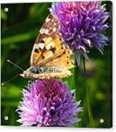Painted Lady -vanessa Cardu Acrylic Print by Bill Tiepelman