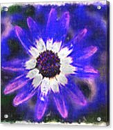 Painted Purple  Acrylic Print