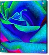 Painted Rose 2 Acrylic Print