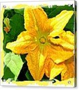 Painted Squash Blossoms Acrylic Print