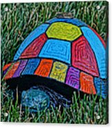 Painted Turtle Sprinkler Acrylic Print