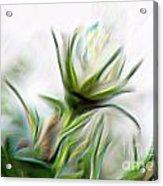 Painterly White Roses Acrylic Print