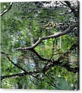 Painting Of The Branches Acrylic Print