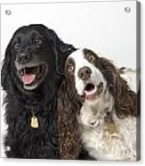 Pair Of Canine Friends Acrylic Print