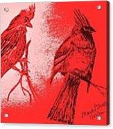 Pair Of Cardinals Acrylic Print
