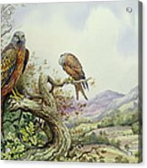Pair Of Red Kites In An Oak Tree Acrylic Print by Carl Donner