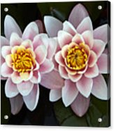 Pair Of Water Lilys Acrylic Print