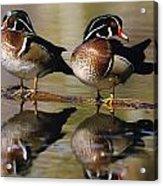Pair Of Wild Birds Acrylic Print