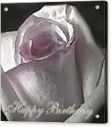 Pale Pink Rose Greeting Card.   Birthday Acrylic Print