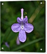 Pale Purple Acrylic Print