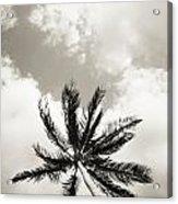 Palm And Sky Acrylic Print