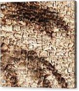 Palm Fragment Acrylic Print