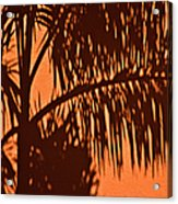 Palm Frond Abstract Acrylic Print