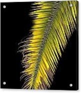 Palm Frond Against Black Acrylic Print