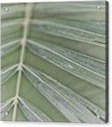 Palm Leaf Acrylic Print
