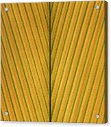 Palm Leaf Showing Midrib And Veination Acrylic Print