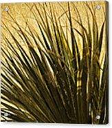 Palm Leaves 1 Acrylic Print