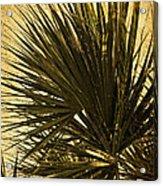 Palm Leaves 2 Acrylic Print