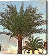 Palm On The Avenida Acrylic Print