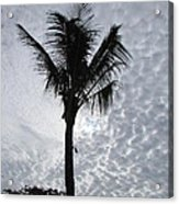 Palm Shadow Acrylic Print