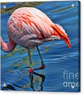 Palm Springs Flamingo Acrylic Print