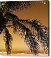 Palm Tree And Sunset In Mexico Acrylic Print by Darren Greenwood