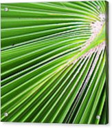 Palm Tree Frond Acrylic Print