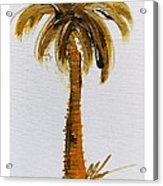 South Carolina Palm Tree Acrylic Print