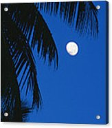Palm Tree Silhouetted Against The Sky Acrylic Print