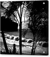 Palm Tree Silouette Acrylic Print