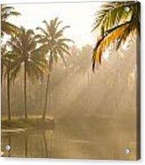Palm Trees And Sunbeams, Kerala, India Acrylic Print