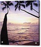 Palm Trees At Dusk Acrylic Print