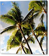 Palm Trees At Twilight Acrylic Print