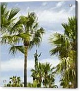 Palm Trees In Spain Acrylic Print