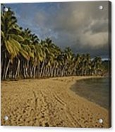 Palm Trees Line A Dominican Republic Acrylic Print by Raul Touzon