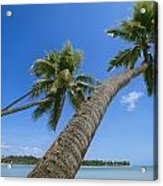 Palm Trees On A Tropical Beach, Fiji Acrylic Print