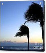 Palm Trees Swaying In The Wind Acrylic Print by Yali Shi